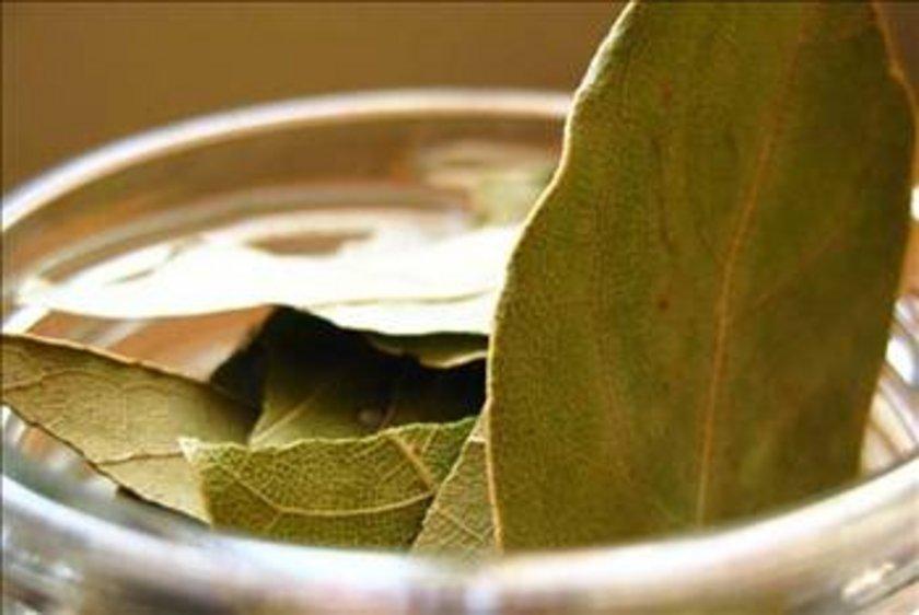 Defne, her zaman yeşil bir ağaçtır. Yazın ve kışın yaprağını dökmez. Aromatik bir bitki olan defnenin kokusu hoştur.