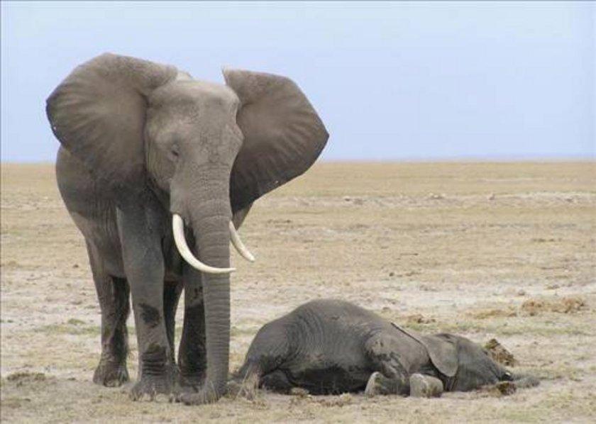 Filler, REM bölümü dışında ayakta uyurlar. Ancak REM bölümü için yere uzanırlar.\n\n