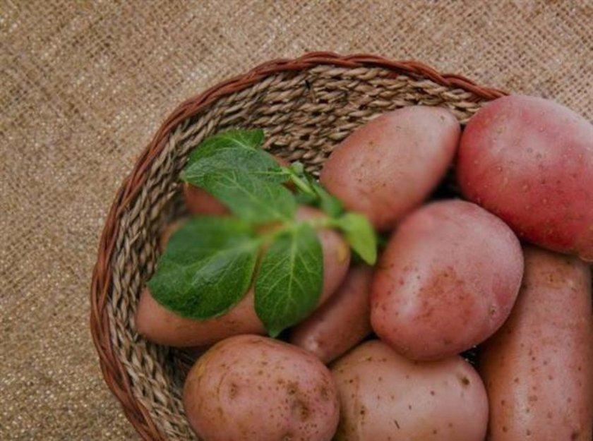 Patates\n<br>Çiğ patates suyu mide yanmasının doğal ilacıdır. Patatesi soyup katı meyve püresinde suyunu sıkın. Su, havuç suyu ya da kereviz suyu ile karıştırıp için. \n