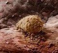 <p>1 hafta sonra. Embriyo rahim duvarına yapışmış durumda.</p>