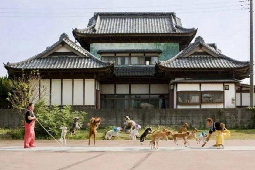 İple en fazla hayvan zıplatma. Bu konudaki rekor 13 köpekle Japonya'da \