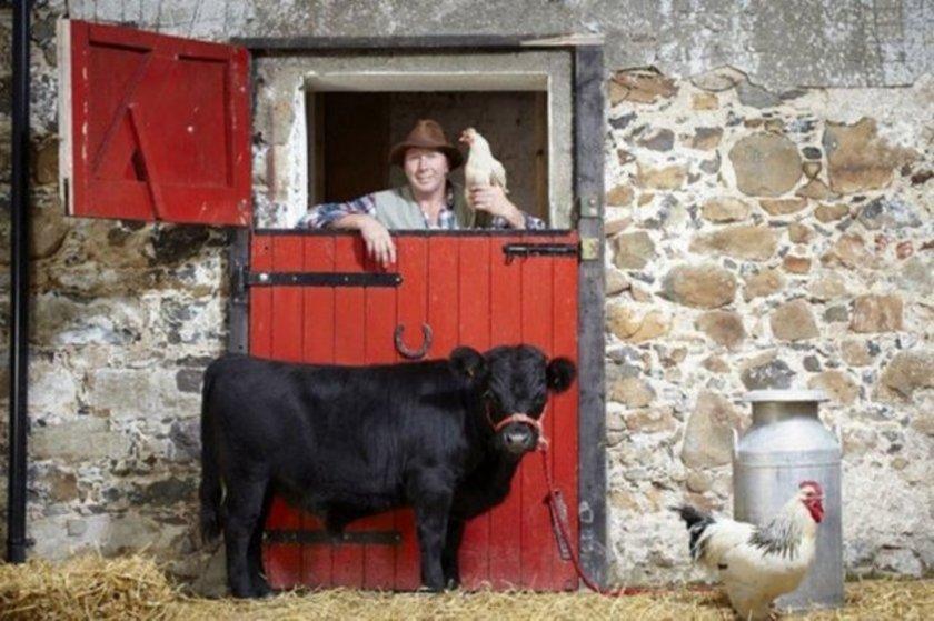 Dünyanın en kısa boylu boğası Archie. Kuzey İrlanda'da yaşayan Dexter cinsi bu boğa 76.2 cm boyunda.