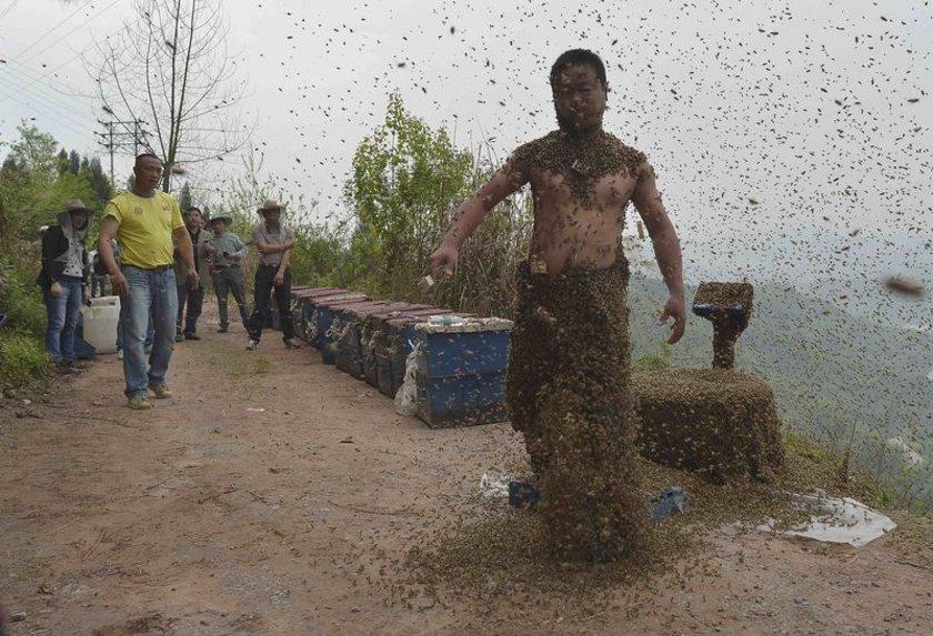 Ping, kraliçe arıları kullanarak diğer arıları vücuduna çekti.