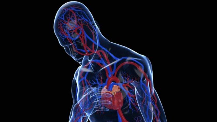 Kan plazmasında antioksidan seviyesi yükselebileceği ve buna bağlı olarak yüksek tansiyon seviyesinde düşme sağlanabildiğini ortaya koyan çalışmalar bulunduğunu belirtti.