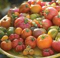 <b>Domates ve domates ürünleri:</b> Alfa-tokoferol, flavanoidler ve özelikle karotenoitler( beta-karoten) gibi önemli antioksidanlar bakımından zengindir.