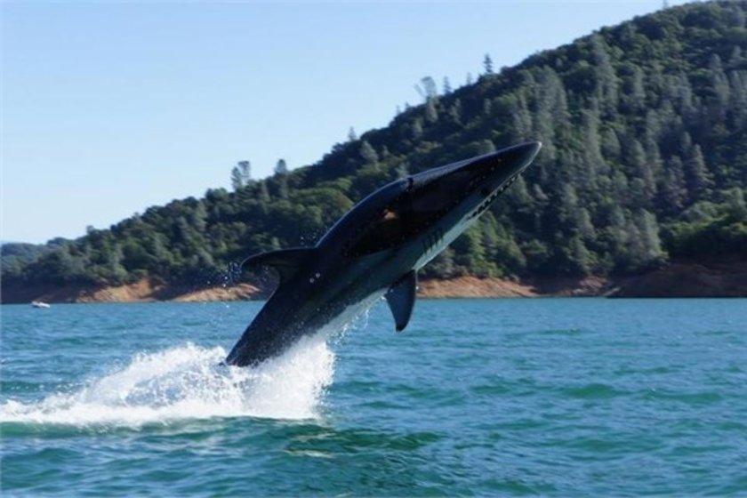 Büyük beyaz köpekbalığı botu\n<br>65 bin dolar.