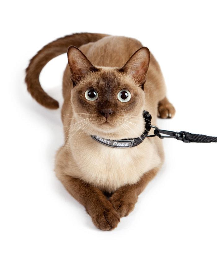 Bunun yerine pire ve bit solüsyonlarını evcil hayvanınızın kürküne sıkarak kullanabilirsiniz.