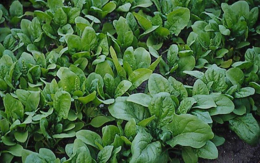 3. Koyu Yeşil Yapraklı Sebzeler:\nAnnenin emzirme dönemindeki beslenmesi doğrudan sütün içeriği ile ilişkili.