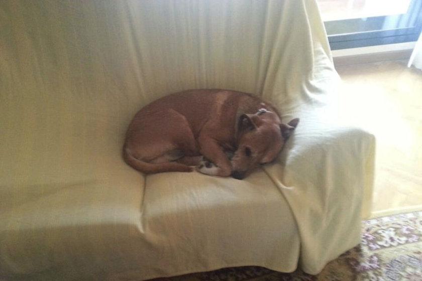 Hemşirenin köpeği Excalibur, Ebola virüsü yayma potansiyeline sahip olduğu için uyutulmuştu.