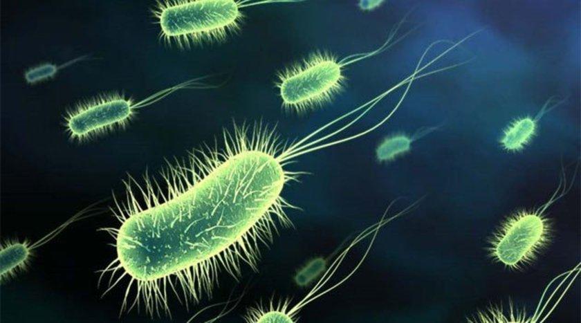 Histatin gibi antibakteriyel proteinler açısından zengin olan tükürük, yaraları iyileştirir ve mikropları öldürür. Ağız yaralarının en hızlı iyileşen yaralar olmasının sebebi budur.