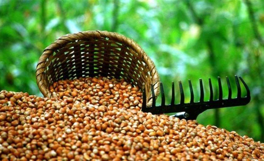 E vitamini aynı zamanda\nbir antioksidan olarak kalp ve beyin hücrelerini moleküler hasardan korur.
