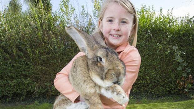 Dünyanın en büyük tavşanı...