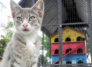 Sokak kedilerine 3 katlı villa barınak