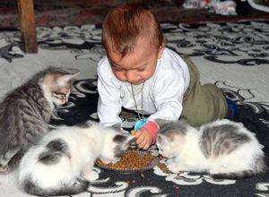 Kedi yavruları daha şanslı çıktı