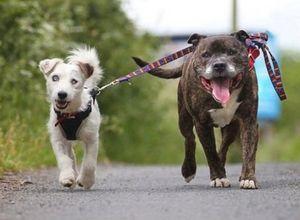 Terk edilen köpeklerin sıradışı dostluğu