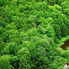 Dünyada en çok ağaç hangi ülkede!