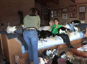 1000 kedi servetini yedi!