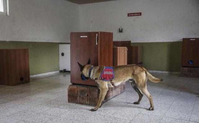 Jandarma'nın 'can kurtaran köpekler'i