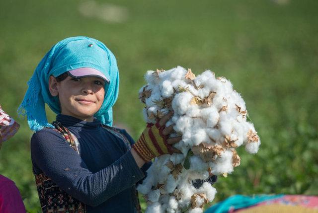 Burası Türkiye'nin pamuk üretiminin önemli kısmının yapıldığı Şanlıurfa'nın Harran Ovası...