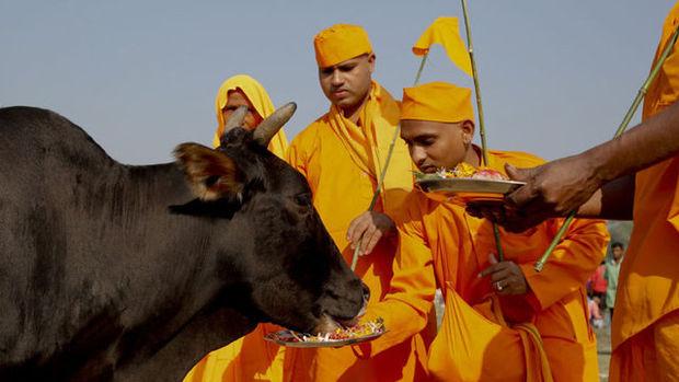 Hindistan'da kutsal inek protestosu