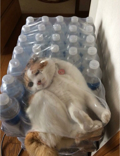 Kediler oldukça dar olan yerlere kendilerini sığdırabilmeleriyle bilinirler. Kedi sahiplerinin çektiği bu görüntüler de bu düşünceyi kanıtlar nitelikte!