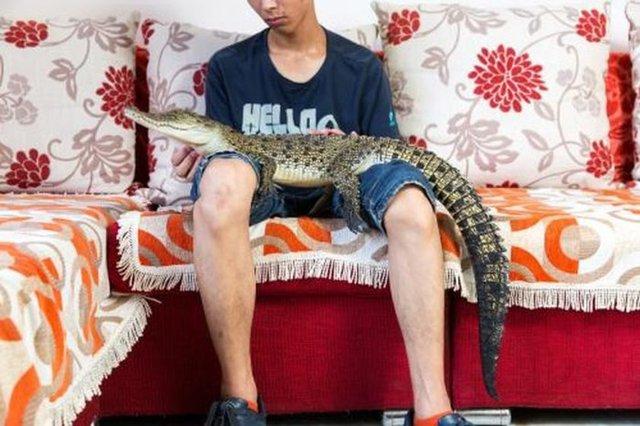 Çinlilerin sosyal medya hesaplarından paylaştığı ilginç evcil hayvanları...