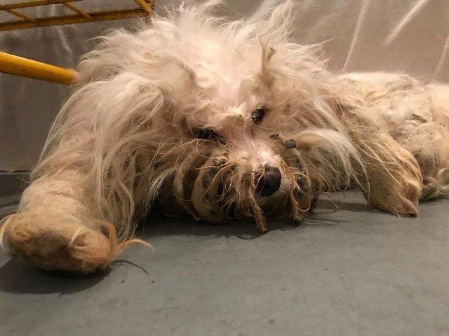 ABD'nin Illinois eyaletinin Chicago kentinde bulunan köpeğin hali yürek burktu.