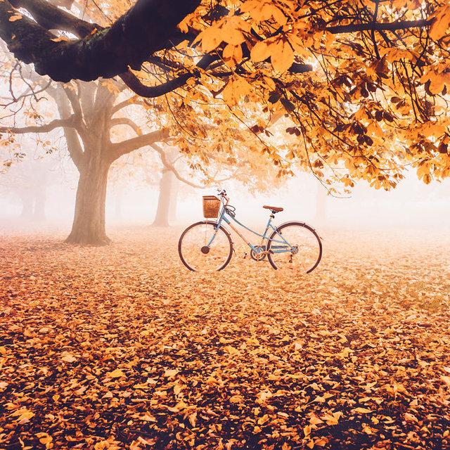 Sonbahar demek doğanın yeşilden sarıya, kahveye, kırmızıya dönüşmesi demek. Nasıl ki yaz deyince akla masmavi bir deniz, yemyeşil bir doğa akla geliyorsa sonbaharın da en akılda kalıcı simgesi sarı, kahverengi ve turuncu renklerdeki ağaçlar...