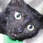 Türkiye'nin konuştuğu inatçı kedi yakalandı