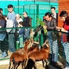 GİRESUN'DA HAYVANAT BAHÇESİ YOĞUN İLGİ GÖRÜYOR