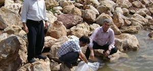 AMASYA'DA 2 GÖLETE 20 BİN YAVRU BALIK BIRAKILDI