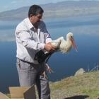 TEDAVİLERİ YAPILAN 'PUHU' VE 'LEYLEK' DOĞAYA BIRAKILDI