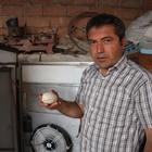 Çankırı'da toy kuşu yumurtası bulunduğu iddiası