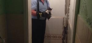 "Yavru kediyi kurtarma ""operasyonu"""