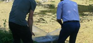 Yeniçağa Gölü'ne 15 bin yavru balık bırakıldı