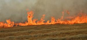 Ayaş'ta anız yangını