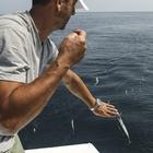 Sezon öncesinde palamut avı umut veriyor