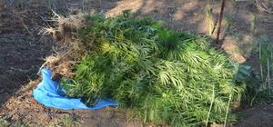 Bolu'da, hint keneviri, kaçak içki ve sigara ele geçirildi