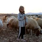 """Görme engelli Suriyeli çobanın """"ekmek kavgası"""""""