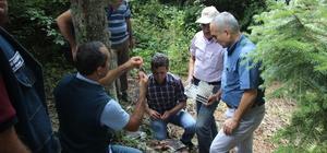Orman zararlılarına karşı böcekle mücadele edilecek