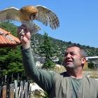 Peçeli baykuş Burdur'da tedavi ediliyor