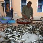 Balıkçı tezgahları şenleniyor