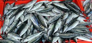 Doğu Karadenizli balıkçı hayal kırıklığı yaşıyor