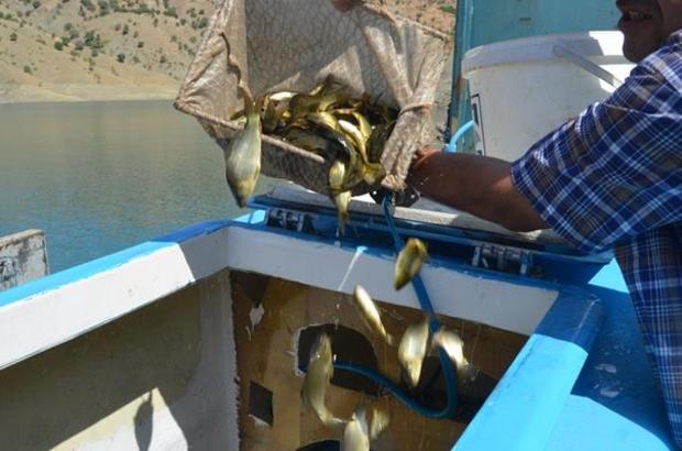 Siirt'te barajlara yavru balık bırakıldı