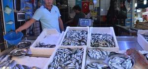 Doğu Karadeniz'de balık bereketi