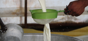 Yayladan sofraya Erzincan tulum peyniri
