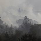 Beypazarı'nda orman yangını