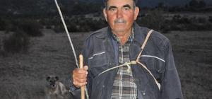 """Köylüler her akşam """"kurt nöbeti""""nde"""