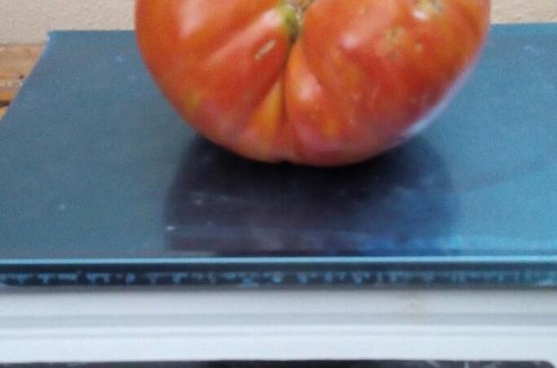 Konyalı çiftçi 1 kiloluk domates yetiştirdi