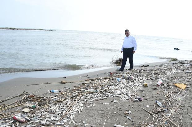 Mersin'de çok sayıda ölü balık bulunması
